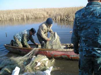 Почти тонну сазана отловили браконьеры в запрещенном круглый год для вылова месте