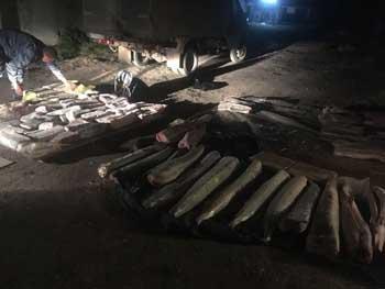 На Селенских исадах в Астрахани торговали браконьерской осетриной