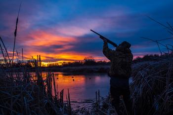 Сезон охоты только начался, а уже в регионе оштрафованы 48 охотников
