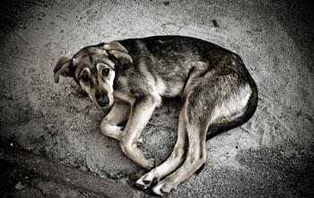 В Астрахани умертвят 600 животных и 120 кастрируют