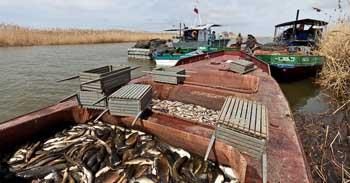 20 тонн неучтенно выловленной рыбы нашли пограничники в Володарском районе