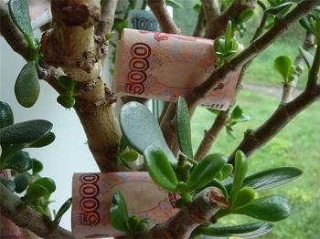 Сотрудник астраханской мэрии обменял дерево на взятку
