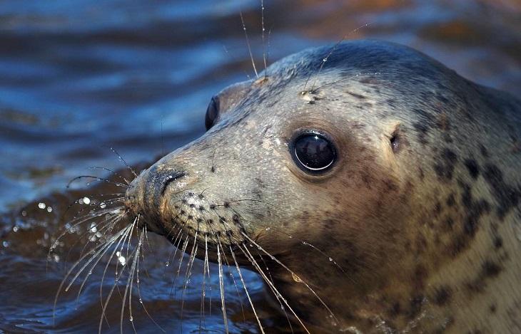 Под Астраханью из браконьерских сетей освобождёны более сотни осетровых и тюлень