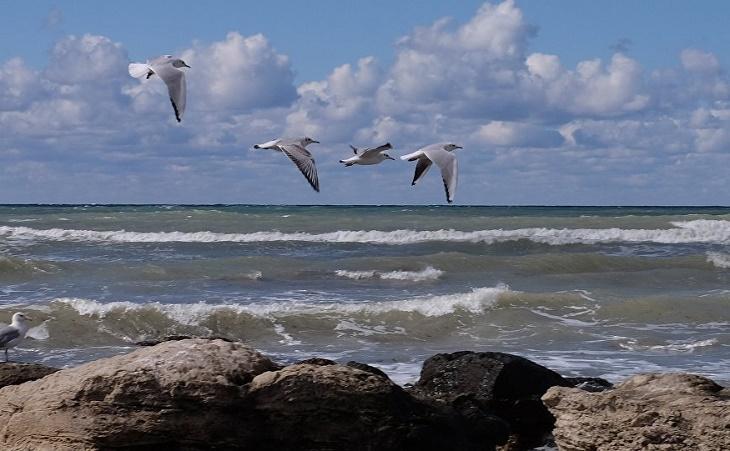 В Казахстане требуют создания Центра по изучению проблем Каспийского моря