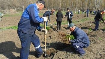 Железнодорожники Приволжской магистрали высадили 3,5 тыс. деревьев в Астрахани