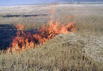 Пожарная опасность высшего класса объявлена в районах Астраханской области