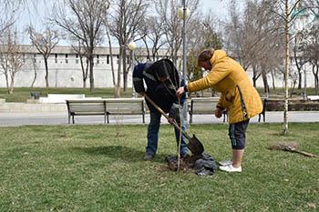 В Астрахани начали сажать деревья, кусты и цветы