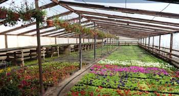 10 000 деревьев и 1 млн цветов. Как озеленят Астрахань в этом году?