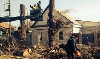 В Ленинском районе спилили многолетние тополя