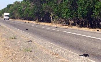 В Астраханской области по неизвестным причинам массово погибли вороны
