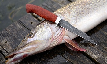 Астраханец убил на рыбалке собственного сына
