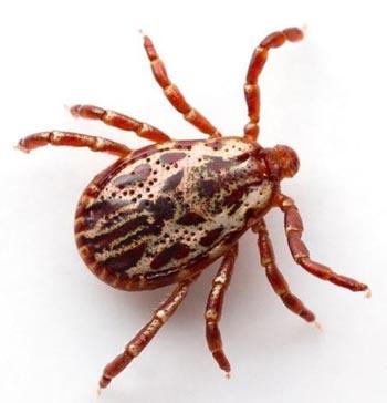 Астраханцев атакуют паукообразные