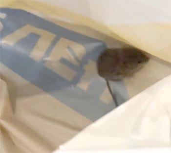 Астраханцу в «Ленте» вместе с продуктами отпустили грызуна