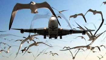 Прокуратура обязала астраханский аэропорт создать систему наблюдения за орнитологической обстановкой
