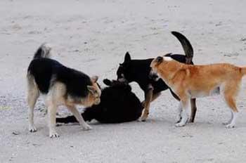 В Трусово бродячие собаки едва не обглодали труп женщины