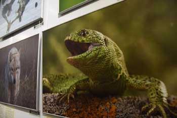 В Астрахани открылась выставка фотографий астраханской природы «Сохраняя будущее»