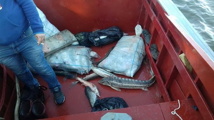 Астраханские браконьеры получили по закону
