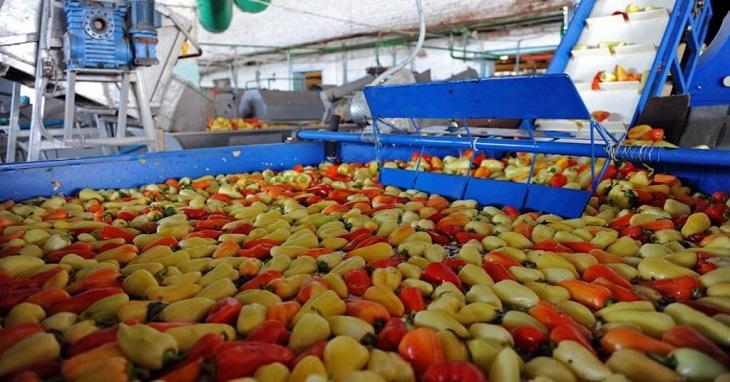 Астраханская переработка овощей модернизируется