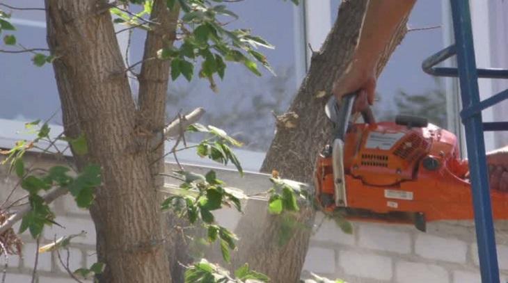 Из-за аварийных деревьев в Астрахани перекроют центральную улицу