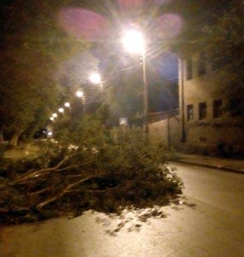 В Астрахани вновь упало дерево