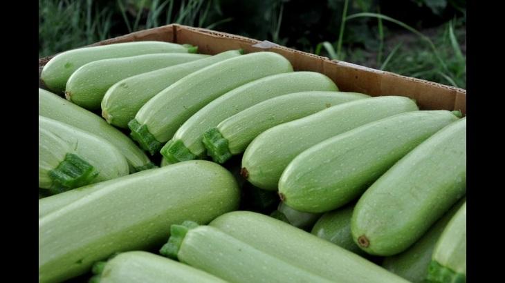 Первые астраханские овощи уже идут на переработку