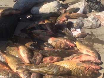 На стихийном рынке на улице Каховского задержан продавец браконьерской рыбы
