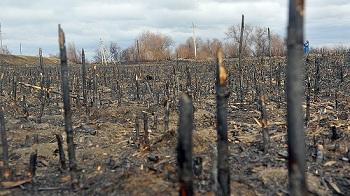 Кто и зачем сжигает Астраханскую область