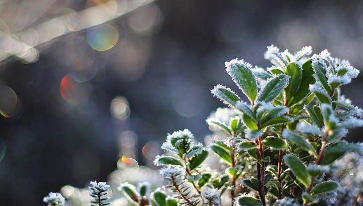 Апрель приходит в Астрахань с заморозками