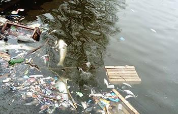 Из-за оттепели в лебедином озере обнажились мусор и мёртвая рыба