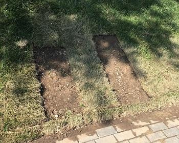 Вандалы испортили новый газон обновлённой Астрахани
