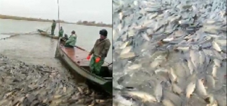 Астраханская артель перестаралась с ловом рыбы