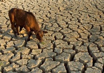 На юге России нарастает засушливость