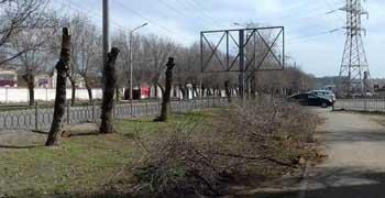 Ради чего спиливают здоровые деревья на Николая Островского?