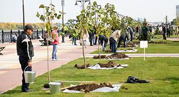 На Петровской набережной чиновники и депутаты посадили двести деревьев
