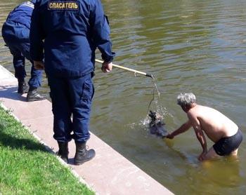 Спасатели и астраханцы пытались вызволить пса из Лебединого озера