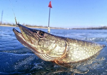 В Астраханской области временно запрещена рыбалка