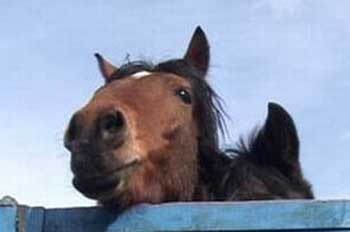 Лошади без документов ускакали обратно в Казахстан