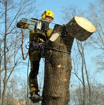 Спили одно дерево в Астрахани – посади десять!