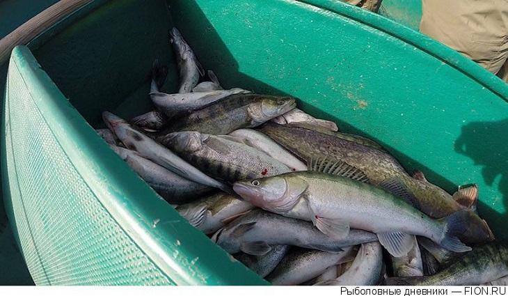 Астраханские рыбопромышленники переловили рыбы на 11 миллионов рублей