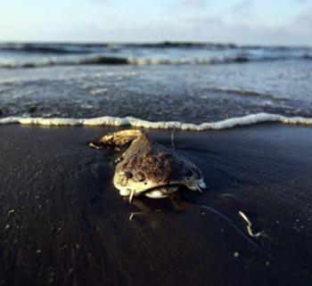 Нефть и рыба – дружба на века: о ВКТУ и не только
