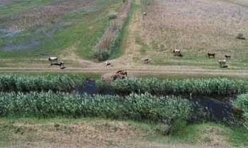 В Икрянинском районе незаконно пасли скот в заказнике