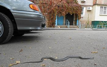 Конец октября, а змеи в Астрахани по-прежнему ползают среди городских построек