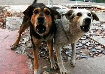 Роспотребнадзор Астраханской области признал острую проблему бродячих собак