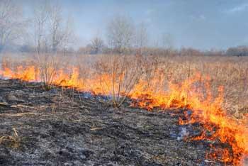 Пожарные региона сбились с ног, задерживая поджигателей