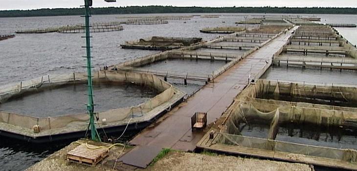 Травь-рыба. На аквафермах рыбу накачивают химикатами?