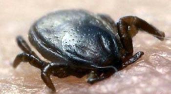 В Астраханской области резко растёт количество укушенных клещами