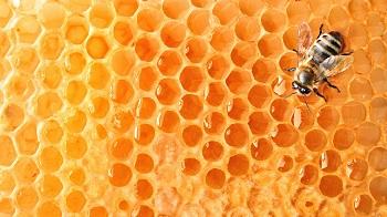 Трудности провоза мёда через границу в Астраханской области