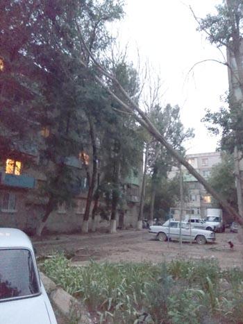 В спальном районе Астрахани рухнуло дерево