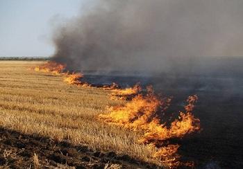 Можно ли остановить эпидемию ландшафтных пожаров?