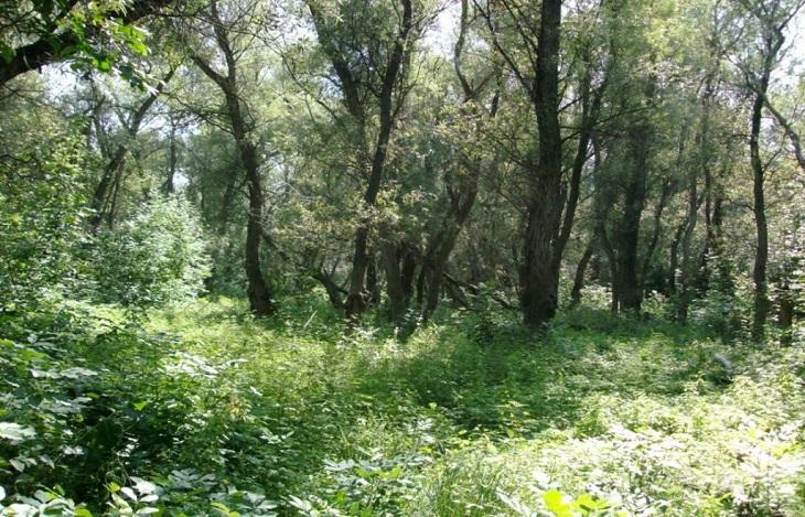 Походы в астраханские леса запрещены